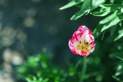 лето предпосылки естественное Стоковое Фото