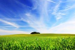 лето предпосылки естественное Стоковое Изображение