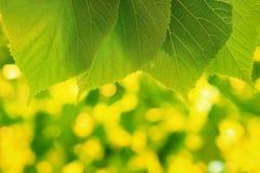 лето предпосылки зеленое Стоковая Фотография RF