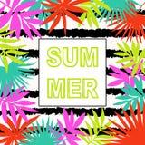 лето предпосылки тропическое Стоковые Изображения RF