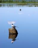 лето природы ландшафта dombai caucasus 2 птицы сидя на пне дерева вставляя вне Стоковое фото RF
