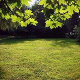 лето разрешения состава предпосылки хорошее зеленое высокое панорамное Стоковые Изображения