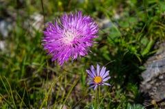 лето сада цветков цветения Стоковое Фото