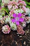 лето сада цветков цветения Стоковые Изображения RF