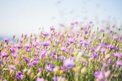 лето сада цветков цветения Стоковая Фотография RF
