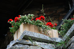 лето сада цветков цветения Стоковые Фотографии RF