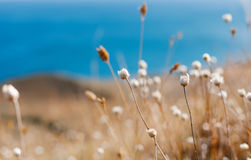 лето сада цветков цветения Стоковая Фотография