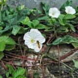 лето сада цветков цветения Стоковые Изображения