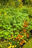 лето сада Стоковые Фотографии RF