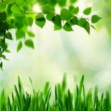 лето сада Стоковое фото RF