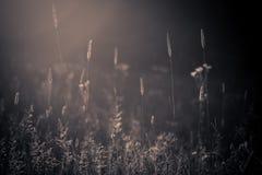 лето лужка одичалое Стоковые Фотографии RF