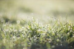 лето утра зеленого цвета травы росы Стоковая Фотография RF