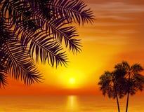 лето флористической ночи конструкции предпосылки безшовное ваше Пальмы на предпосылке  Стоковая Фотография
