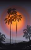 лето флористической ночи конструкции предпосылки безшовное ваше Пальмы в ноче вектор Стоковое Изображение