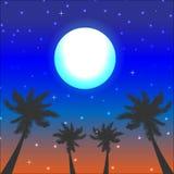 лето флористической ночи конструкции предпосылки безшовное ваше Стоковое фото RF