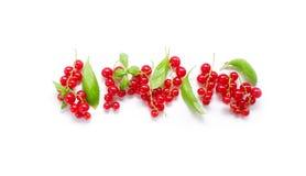 лето ягод свежее redcurrant зрелый Стоковые Фотографии RF