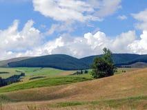 лето zealand ландшафта кафа новое Стоковые Фотографии RF