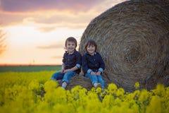 2 дет, братья мальчика в рапсе семени масличной культуры field, сидящ на a Стоковое Изображение