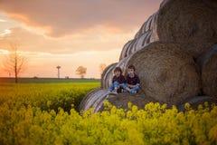 2 дет, братья мальчика в рапсе семени масличной культуры field, сидящ на a Стоковые Фото