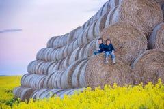 2 дет, братья мальчика в рапсе семени масличной культуры field, сидящ на a Стоковые Изображения RF