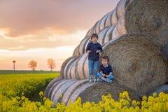 2 дет, братья мальчика в рапсе семени масличной культуры field, сидящ на a Стоковые Фотографии RF
