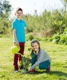2 дет засаживая новое дерево Стоковые Изображения RF