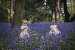 2 дет играя в древесине вполне bluebells Стоковая Фотография
