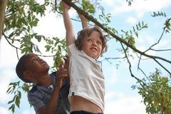 2 дет на дереве Стоковое Изображение