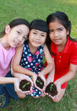 3 дет при руки держа деревце в поверхности почвы Стоковые Изображения RF