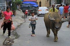 2 дет пробуют привести огромного буйвола Стоковые Фотографии RF