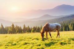 Ехать в горах на заходе солнца Стоковое Изображение RF