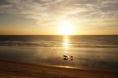Ехать на заходе солнца Стоковая Фотография RF