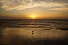 Ехать на заходе солнца Стоковые Изображения
