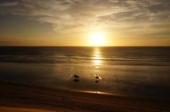 Ехать на заходе солнца Стоковое Изображение