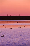 Ехать озером Стоковая Фотография