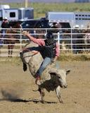 Ехать тот Bull Стоковая Фотография
