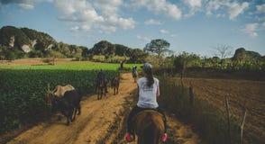 Ехать через долину Vinales vinales Кубы Стоковая Фотография RF