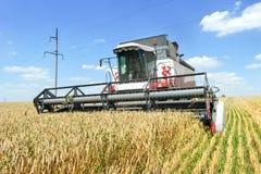 деятельность пшеницы жатки поля зернокомбайна Стоковые Изображения RF