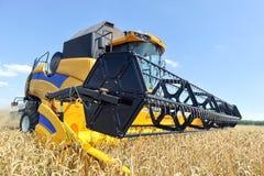 деятельность пшеницы жатки поля зернокомбайна Стоковое фото RF