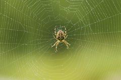 делать сеть паука Стоковые Фотографии RF