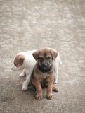 Еда бездомной собаки голодная Стоковые Изображения