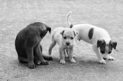 Еда бездомной собаки голодная Стоковые Фото