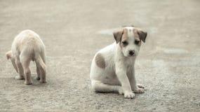Еда бездомной собаки голодная Стоковое Изображение