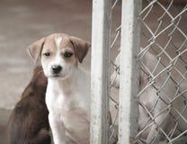 Еда бездомной собаки голодная Стоковое Фото