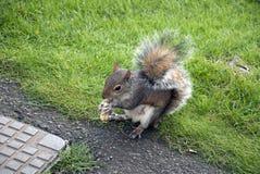 еда белки гайки Стоковая Фотография
