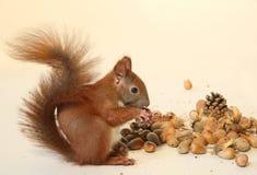 еда белки Стоковое Изображение RF