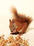 еда белки Стоковые Изображения RF