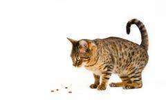 еда кота Стоковое Фото