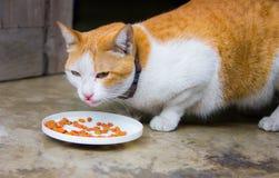 Еда кота Стоковые Изображения