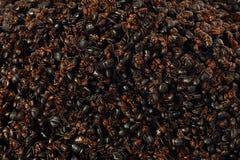 Еда муравьев стоковые фотографии rf